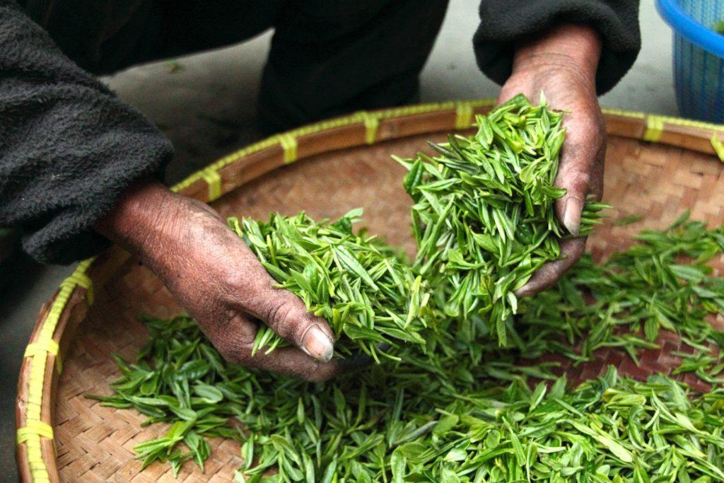Essicatura del tè